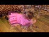 «Пусяня» под музыку Ласковый Май - Бездомный Пес (Версия 2012) www.muzon-club.ru. Picrolla